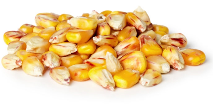 Is it ok to burn treated seed corn in my corn stove?
